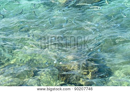 water fish Sea