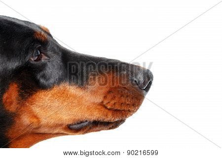Close up of muzzle by dog