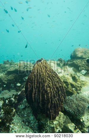 Sponge underwater