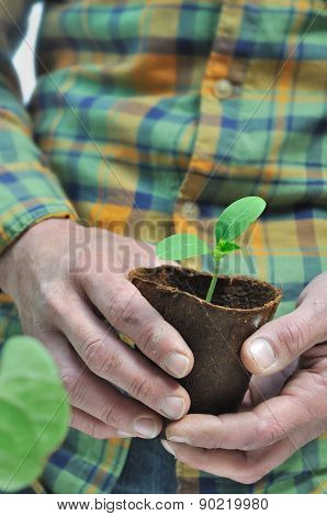 Gardener Holding Seedlings