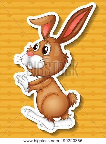 Close up happy rabbit with orange background