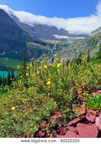 Flowers In Front Of The Grinnell Glacier And Lake In Glacier National Park