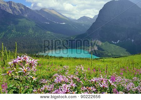 Wild Flowers On The Trail To Grinnell Glacier And Lake In Glacier National Park