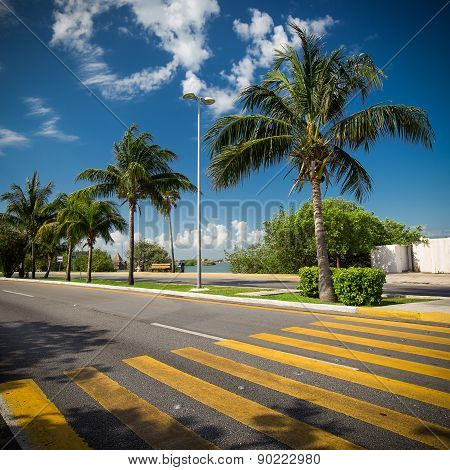 Pedestrian Crossing On Tropical  Road