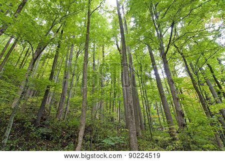 Young Trees Standing Tall In Forest
