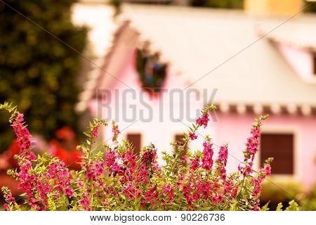 Bush Of Pink Flowers In Garden