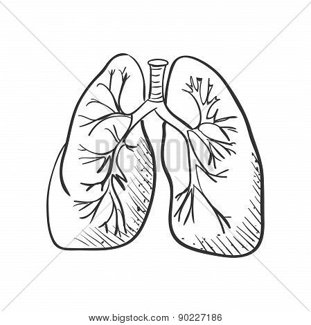lungs doodle drawing, Medical background