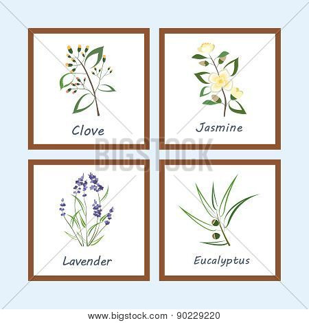 Collection of Herbs . Labels for Essential Oils and Natural Supplements. Lavender, Eucalyptus, Jasmi