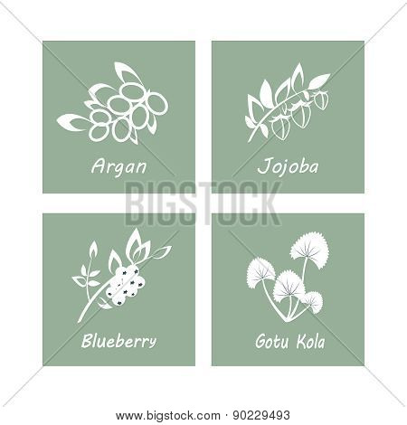 Collection of Herbs . Natural Supplements. Argan, Gotu Kola, Blueberry, Jojoba