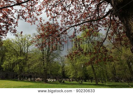 Spring at the old town cemetery in Karlovy Vary, Czech Republic.
