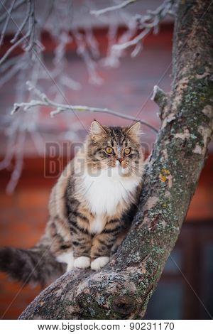 Striped Fluffy Cat On A Winter Walk