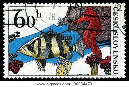 Vintage  Postage Stamp. Aquarium  Fish Datrioides Microlepis.