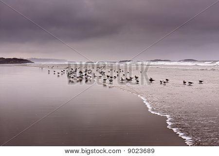 Stormy morning at long beach