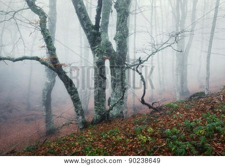 Trail Through A Mysterious Dark Old Forest In Fog. Autumn