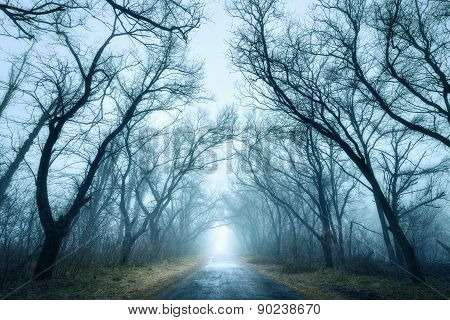 Mysterious Dark Autumn Forest In Green Fog With Road, Trees.