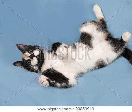 Tricolor Kitten Lying On Blue