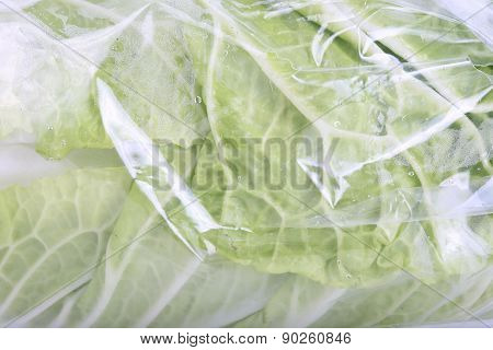 Chinese Cabbage Wrapped In A Plastic Bag