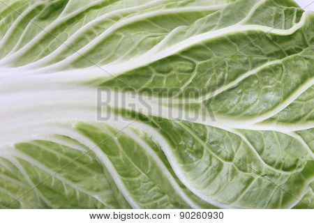 Chinese Cabbage Close Up, Green Plant Texture Background