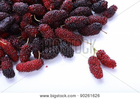 Mulberry Fruit Isolated On White Background
