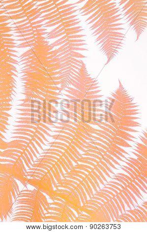 colored orange palm leaves