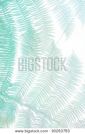colored turquoise palm leaves