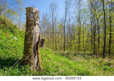 Wood Log In A Forest