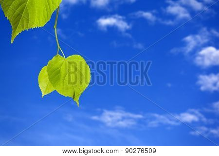 Spring Tilia Leafs And Blue Sky