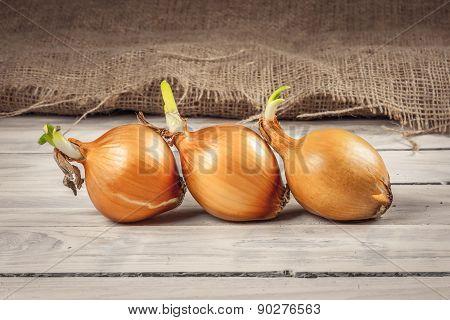 Onions On A Row