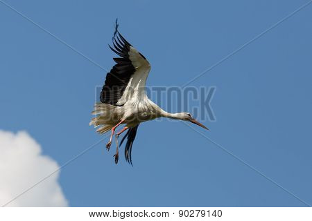 Stork Flies
