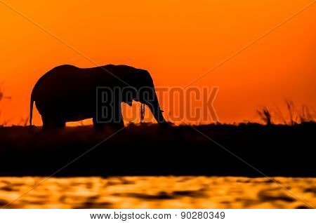 Silhouette Of An Elephant During Sunset