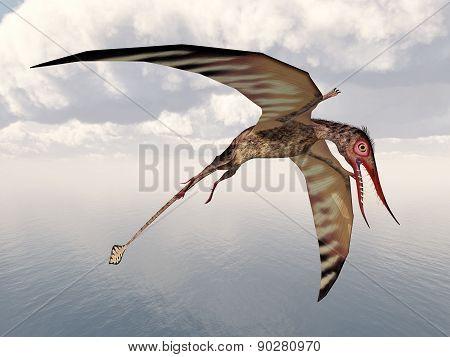 Pterosaur Rhamphorhynchus