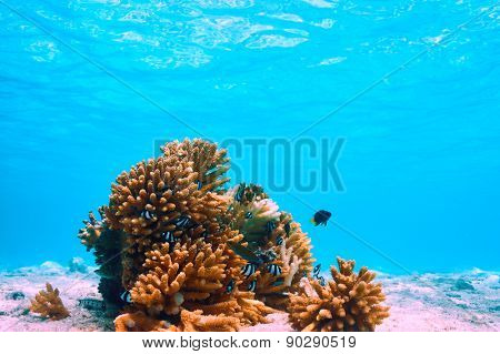 Coral reef at South Ari Atoll, Maldives