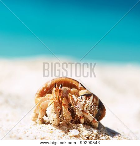 Hermit crab on beach at Seychelles