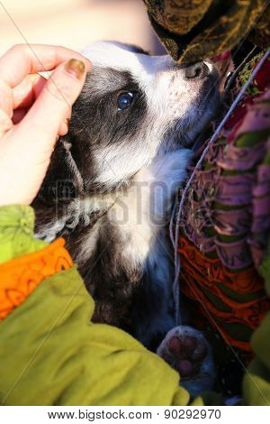 Young Girl Carries A Puppy Dog In Her Arms