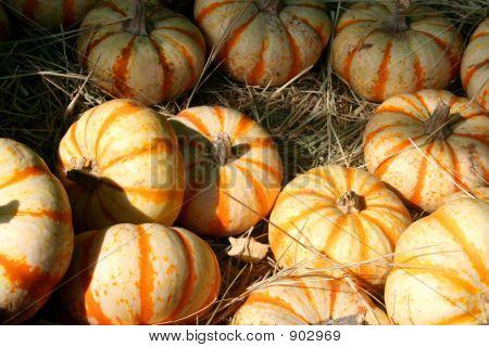 Orange & White Striped Pumpkins