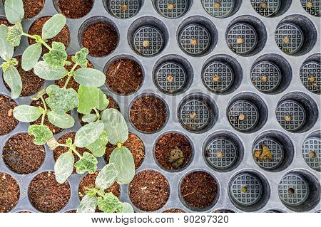Seedling Planted In The Potting Shed