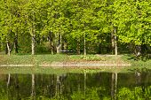 foto of row trees  - row of green trees reflecting in water - JPG