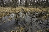 stock photo of swamps  - Small ephemeral pond in a hardwood swamp - JPG