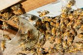 picture of beehive  - Beekeeping at Vietnam Vietnamese agriculture group of bee tank group of beehive in Dalat jungle honey is nutrition eating bee working at bee nest - JPG
