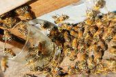 foto of beehives  - Beekeeping at Vietnam Vietnamese agriculture group of bee tank group of beehive in Dalat jungle honey is nutrition eating bee working at bee nest - JPG
