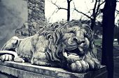 foto of stone sculpture  - Powerfull sculpture of stone lion in Lviv - JPG