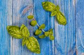 pic of oregano  - Fresh green basil and oregano twigs lying on blue wooden table - JPG