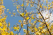 stock photo of october  - Plum tree at Fall - JPG