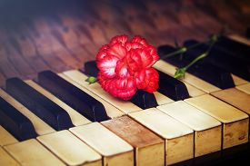 picture of carnation  - Old vintage gand piano keys with a red carnation flower vintage picture - JPG