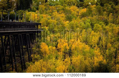 Fall forest colors at the end of the high level bridge located in Edmonton Alberta.