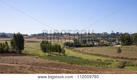Farmland and horses in Ethiopia, panoramic shot