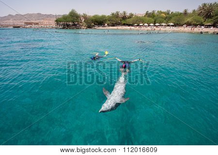 Bottlenose Dolphin Swimming With Divers