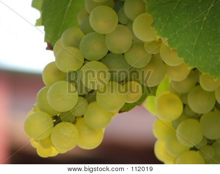 Perfect Grapes