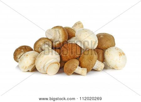 Shiitake And Champignon  Mushroom On White Background
