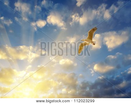 Seagull Spreading Wings In Setting Sun Rays
